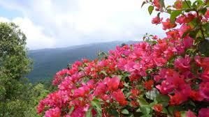 bali-fleurs-dolores-lamarre