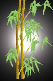 reiki-bambou-beloeil-